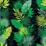 Set tropische Blätter Dschungellaub Stockfotografie
