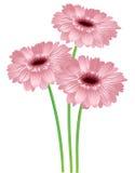 Set trzy kwiatu Zdjęcie Royalty Free