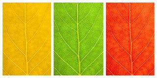 Set trzy tekstura liścia Zdjęcia Royalty Free
