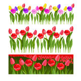 Set of tulips. Field of tulips. Vector Illustration.  Set of tulips Royalty Free Stock Images