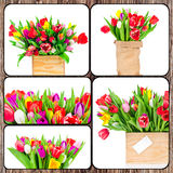 Set of tulips pictures Stock Photo