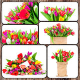 Set of tulips pictures Stock Images