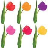 A set of tulips. Vector Stock Photo