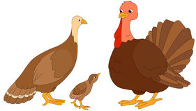 Set of turkey mother, father and poult. Vector illustration stock illustration