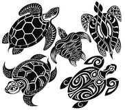 Set of turtles Royalty Free Stock Photos