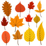 Set of twelve colorful autumn leaves in warm colours. Royalty Free Stock Photos