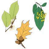 Set of twelve different autumn leaves isolated on white background. Vector illustration. Set of twelve different autumn leaves isolated on white background vector illustration
