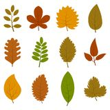 Set of twelve different autumn leaves isolated on white background. Vector illustration Royalty Free Stock Photo