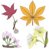 Set of twelve different autumn leaves isolated on white background. Vector illustration. Set of twelve different autumn leaves isolated on white background royalty free illustration