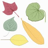 Set of twelve different autumn leaves on white background. Vector illustration. Set of twelve different autumn leaves on white background stock illustration