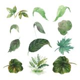 Set of twelve green watercolor leaves. Set of green watercolor leaves. Vector watercolor illustration Stock Photography