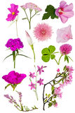 Set of twelve pink color flowers on white Stock Photos