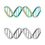 Set of two  DNA symbols on white background Royalty Free Stock Photo