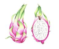 Set of two exotic dragon fruits isolated on white background. Set of two dragon fruits isolated on white background. Watercolor hand drawn illustration of Royalty Free Stock Photography