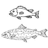 Set of Two Fishes. Freshwater Fish. Vector Illustration Isolated On a White Background Stock Image