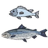 Set of Two Fishes. Freshwater Fish. Vector Illustration Isolated On a White Background Royalty Free Stock Photography