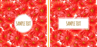 Set of Two Gerbera Backgrounds Royalty Free Stock Photo