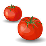 Set of Two Glossy Red Tomatoes Stock Photography