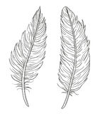Set of two hand drawn  decorative feathers isolated on whi Stock Images