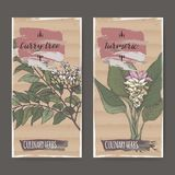 Set of two labels with turmeric and curry tree hand drawn color sketch. Culinary herbs collection. Great for cooking, gardening design Royalty Free Stock Photo