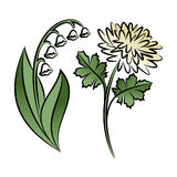 Set of two outlined flowers. Lilies and chrysanthemums Stock Photography