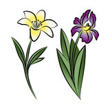 Set of two outlined flowers. Lily and iris Stock Photography