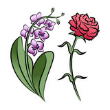 Set of two outlined flowers. Orchid and carnation Stock Image