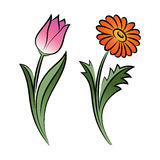 Set of two outlined flowers. Tulip and daisy In sketch Stock Photography