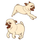 Set of two pug puppies. Vector illustration Royalty Free Stock Photography