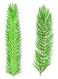 Set of two realistic mesh fir tree branches, isolated on white Royalty Free Stock Photo