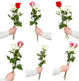Set of two rose flower bouquets in hands Royalty Free Stock Photography