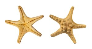 Set of two sides of a starfish, isolated on a white Stock Photos