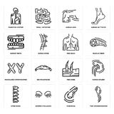 Set of Two Spermatozoon, Pancreas, Spine Bone, Men Knee, Masculine Chromosomes, Back, Human Teeth, Skin, Digestive System icons. Set Of 16 simple  icons such as Stock Photo