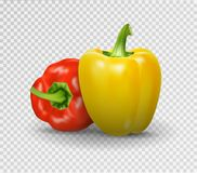 Set of two peppers. Yellow, red pepper. Vector illustration, natural pepper realistic image with shadow for culinary Stock Photography