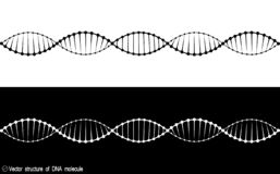 A set of two variants of the DNA molecule. black and white variety. Simple drawing, icon. royalty free illustration