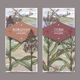 Set of two vintage labels with Sorghum bicolor and Corn aka Maize or Zea mays color sketch. Cereal plants collection. Set of two vintage labels with Sorghum Stock Photos