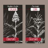 Set of two vintage labels with Sorghum bicolor and Corn aka Maize or Zea mays sketch on black. Cereal plants collection. Great for bakery, agriculture, farming Royalty Free Stock Image