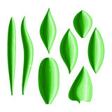 Set of 8 types of shiny green leaves. With dew drops. Design elements. Eps10 Stock Photography