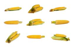 Set of uncooked corn on the cob Stock Photography