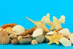 set undervattens- värld för objekthav Royaltyfri Foto