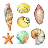 Set of underwater life objects -  illustrations of various tropical seashells and starfish. Marine design. Hand drawn watercolor painting on white background Royalty Free Stock Photography