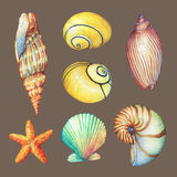 Set of underwater life objects -  illustrations of various tropical seashells and starfish. Stock Image