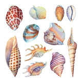 Set of underwater life objects - illustrations of various tropical seashells and starfish. Marine design. Hand drawn watercolor painting on white background Stock Photography