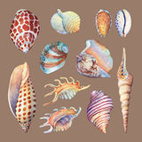 Set of underwater life objects - illustrations of various tropical seashells and starfish. Stock Images