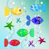 Set of unusual colored fish Royalty Free Stock Image