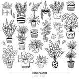Set urocze rośliny w garnkach ilustracji