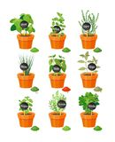 Set of Useful Herbs in Brown Pots with Labels. Set of useful herbs in brown pots with name labels on wooden stick and finished powder spice vector illustration Stock Photography