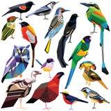 Set Vögel Stockbild