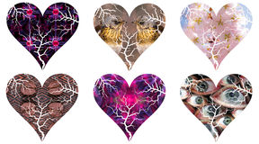 Set of Valentin's day hearts as pictorial silhouettes. A set of Valentin's day hearts as pictorial silhouettes filled with various backgrounds Royalty Free Stock Images