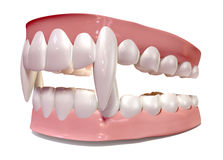 Vampire False Teeth Set Isolated. A set of vampire false teeth set in gums on an isolated background Stock Photos